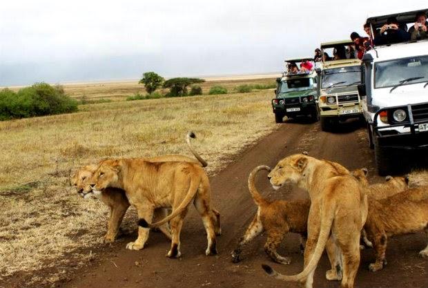 Harar-Giving-Feeding-Wild-Hyena-Ecotourism