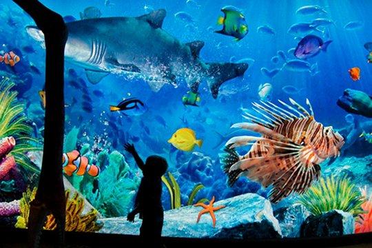 Siam Ocean World Bangkok tourist spots (TripAdvisor)