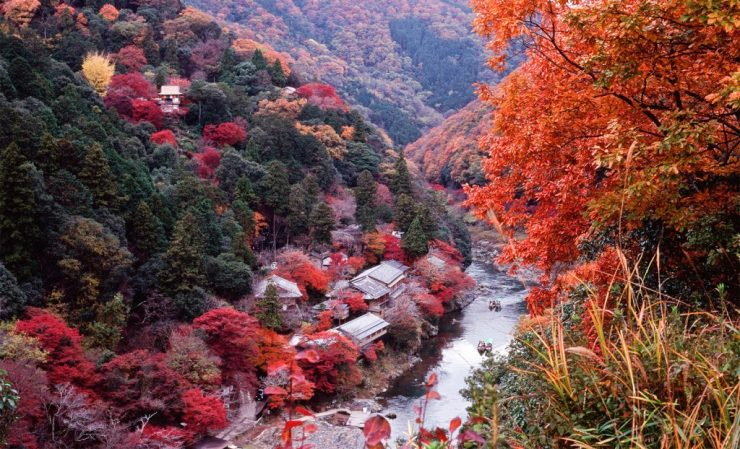 Beatiful Autumn Tour in Kyoto