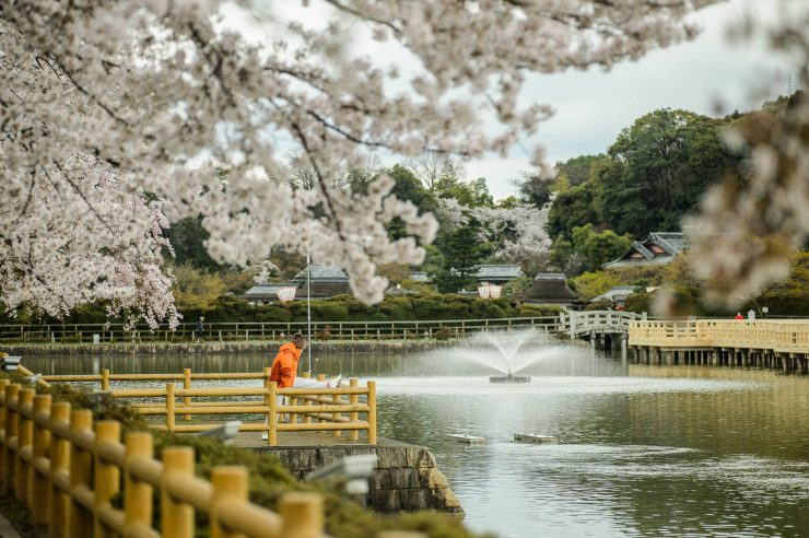 Cherry Blossom Season at Nagaoka-tenmangu Shrine Kyoto
