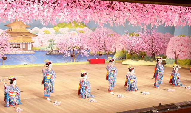 Cherry Blossom Season in Kyo-no-odori Kyoto