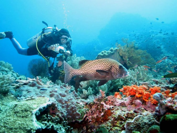 Dive Destinations to Bali – Tulamben, Nusa Penida and Menjangan