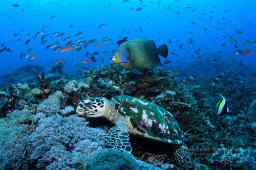 Diving in Nusa Penida (underwatertribe.com)