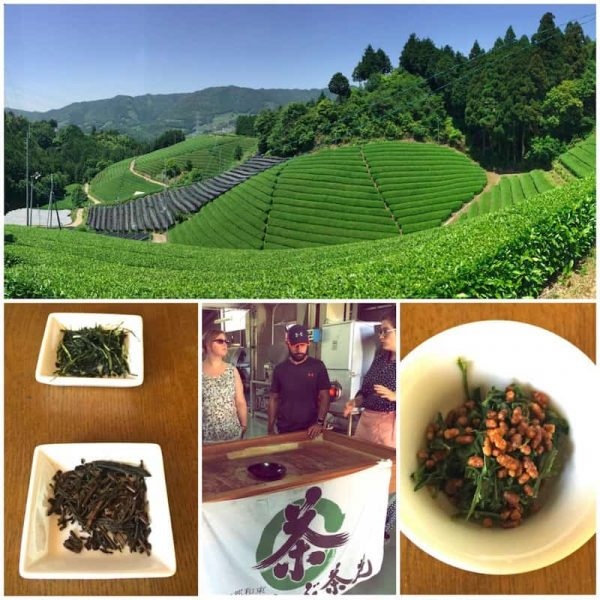 Japanese Tea Tour in Kyoto