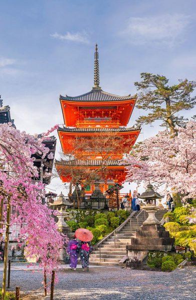 Kiyomizu-dera Temple and cherry blossom season (Sakura) spring time in Kyoto
