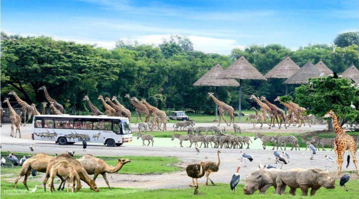 Safari World Bangkok Thailand (klook.com)
