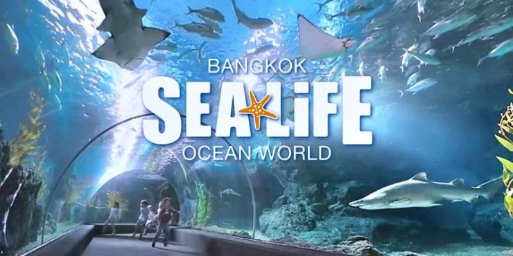 Sea Life Bangkok Ocean World Bangkok Thailand (KKday)