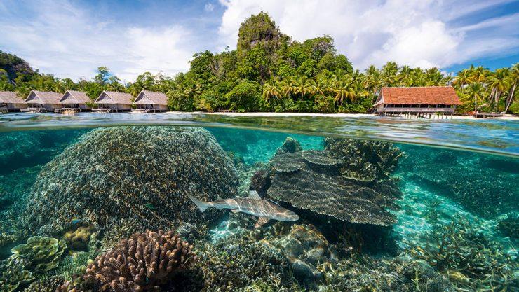 Wealth of natural resources of Raja Ampat Island (divernet.com)