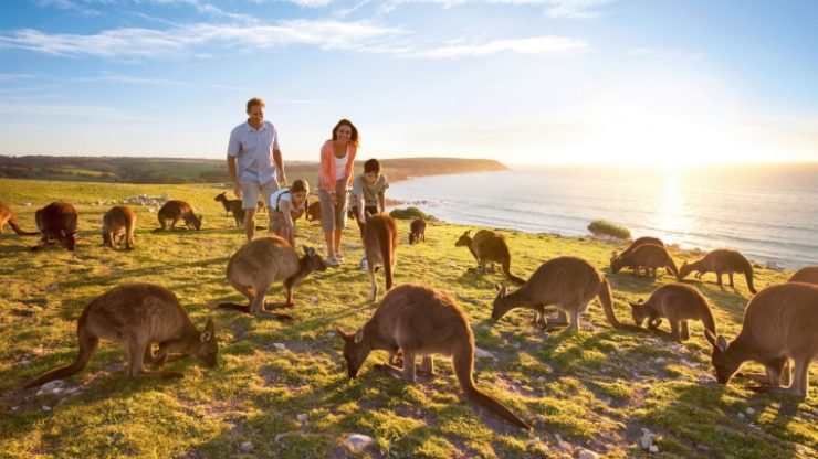 South Australia (Tourism (steemit.com)
