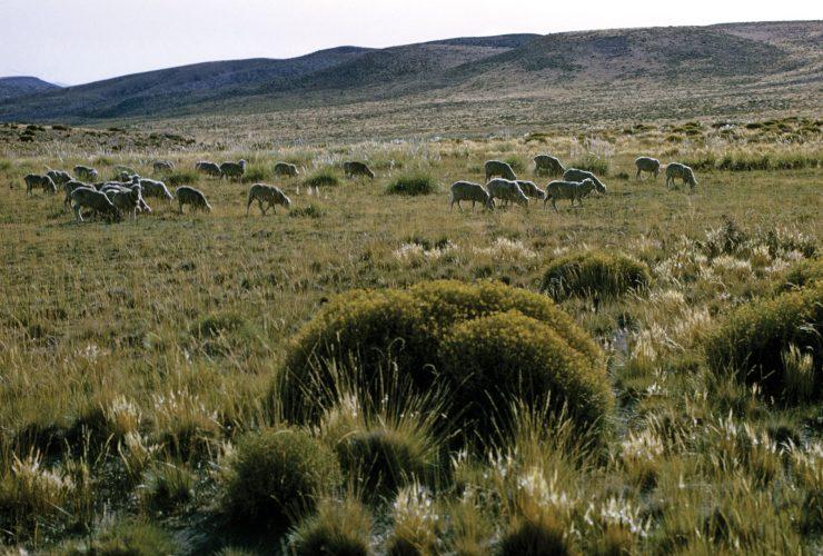 The Pampas - Argentina (Britanica)