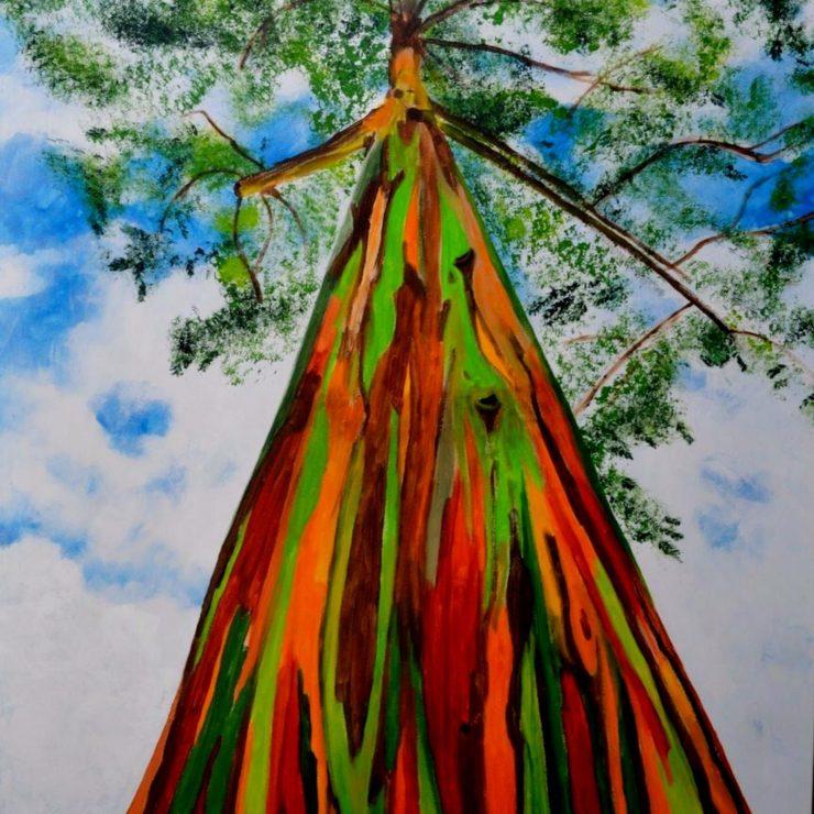 Colored Trees Rainbow Eucalyptus Deglupta (Pinterest)