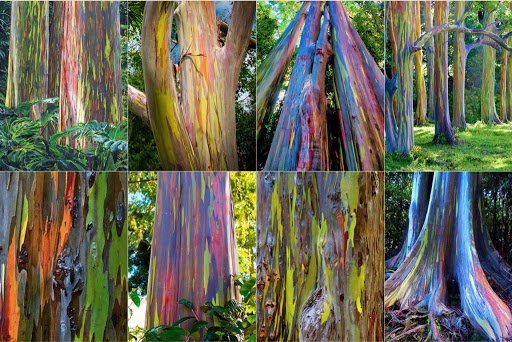 Painted Trees and Colored Trees (Green Building Architecture)